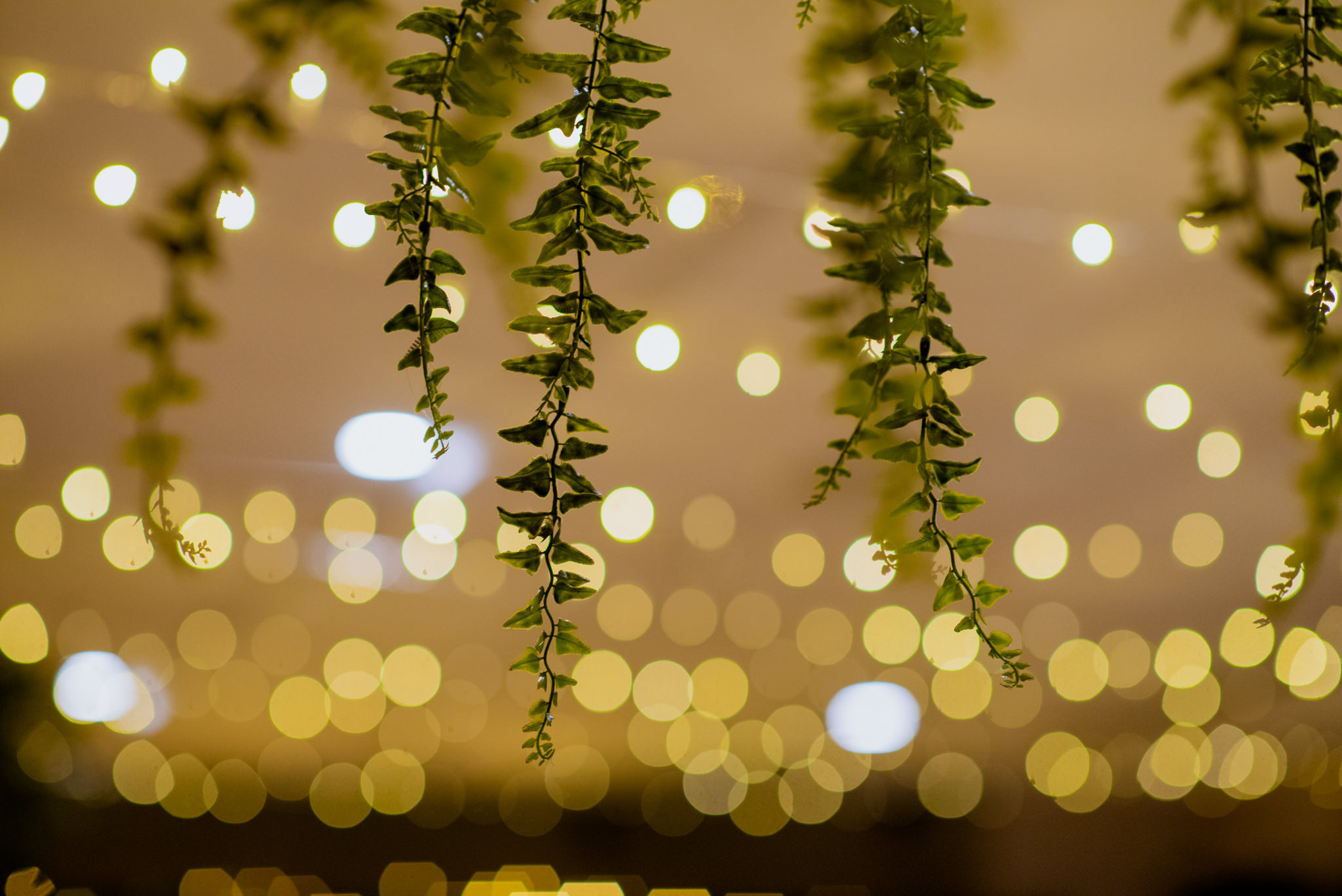 Green plants hanging from the ceiling with fairy lights out of focus in the background