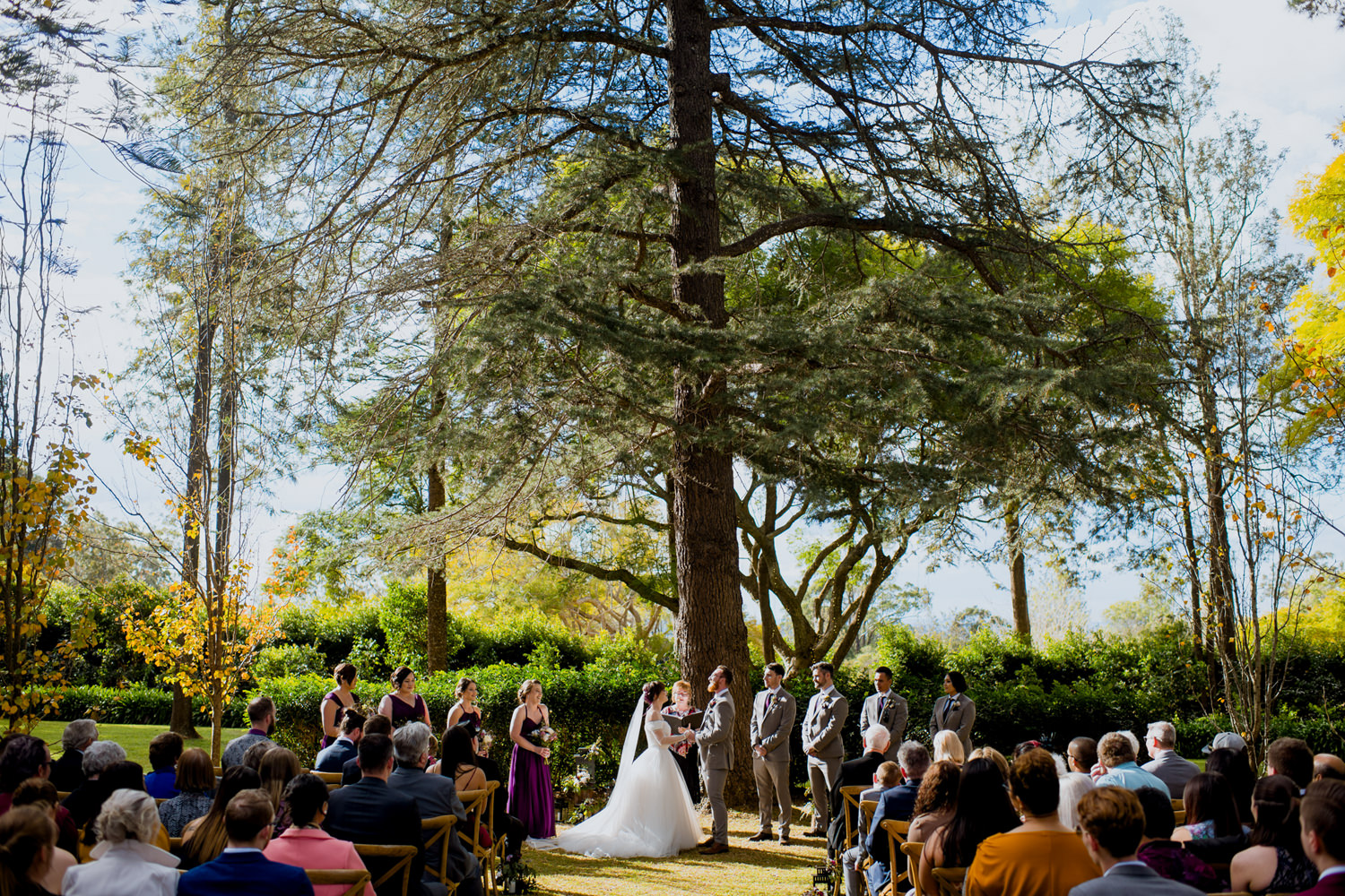 Wedding ceremony under a large leafy green tree in a garden