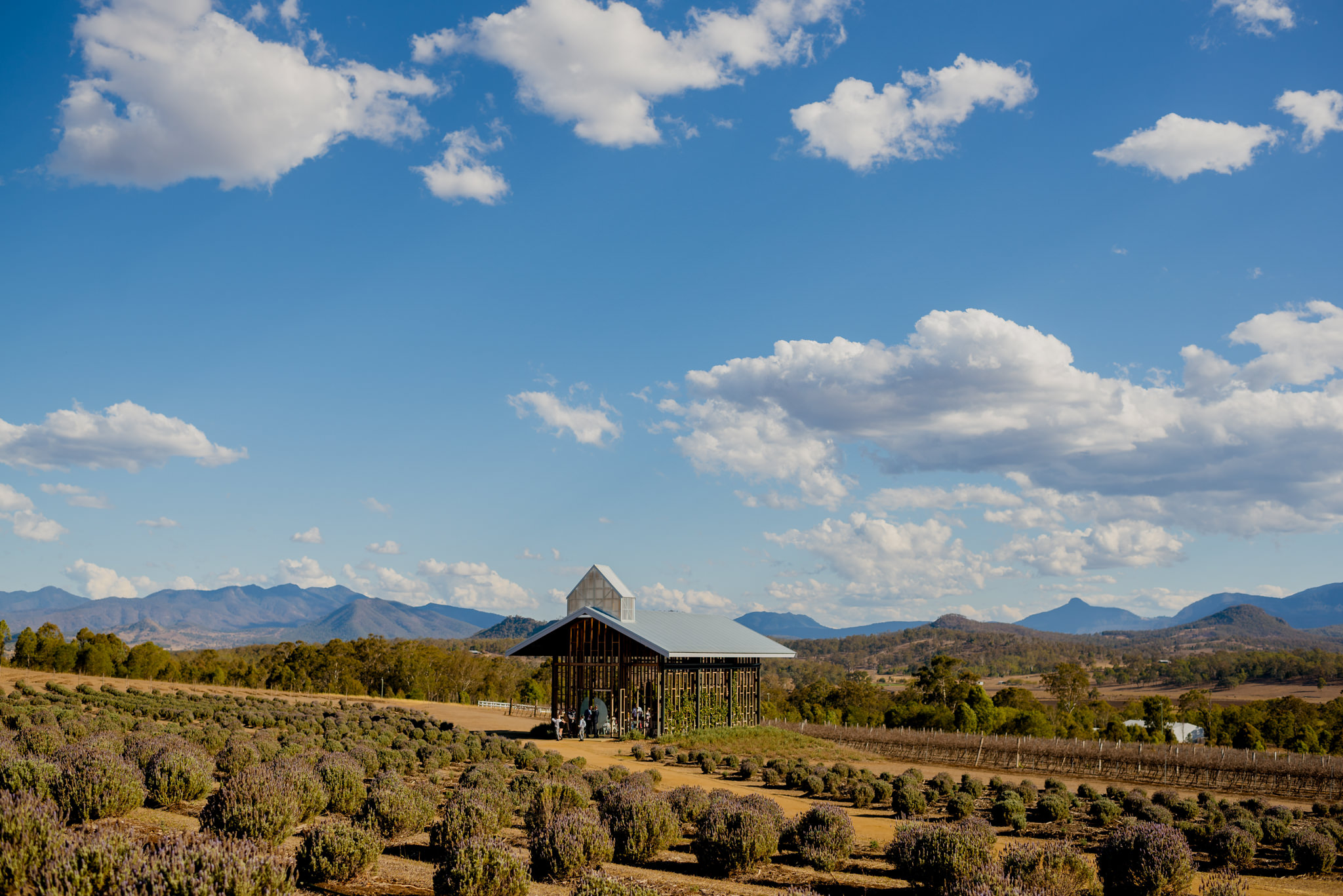 Small wooden chapel in a lavender farm under a blue sky with mountains in the background