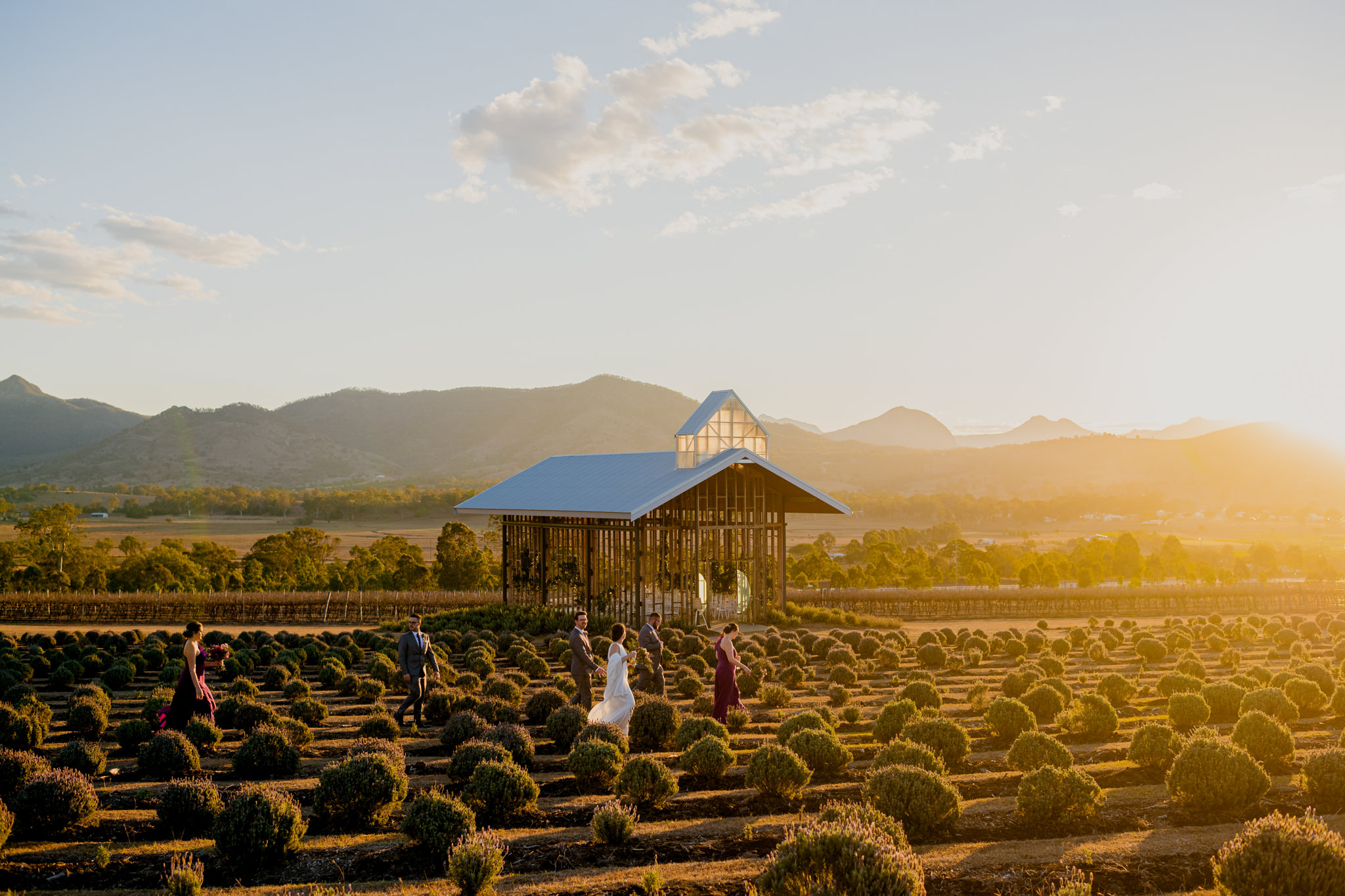 Bridal party standing amongst lavender plants at Kooroomba during sunset