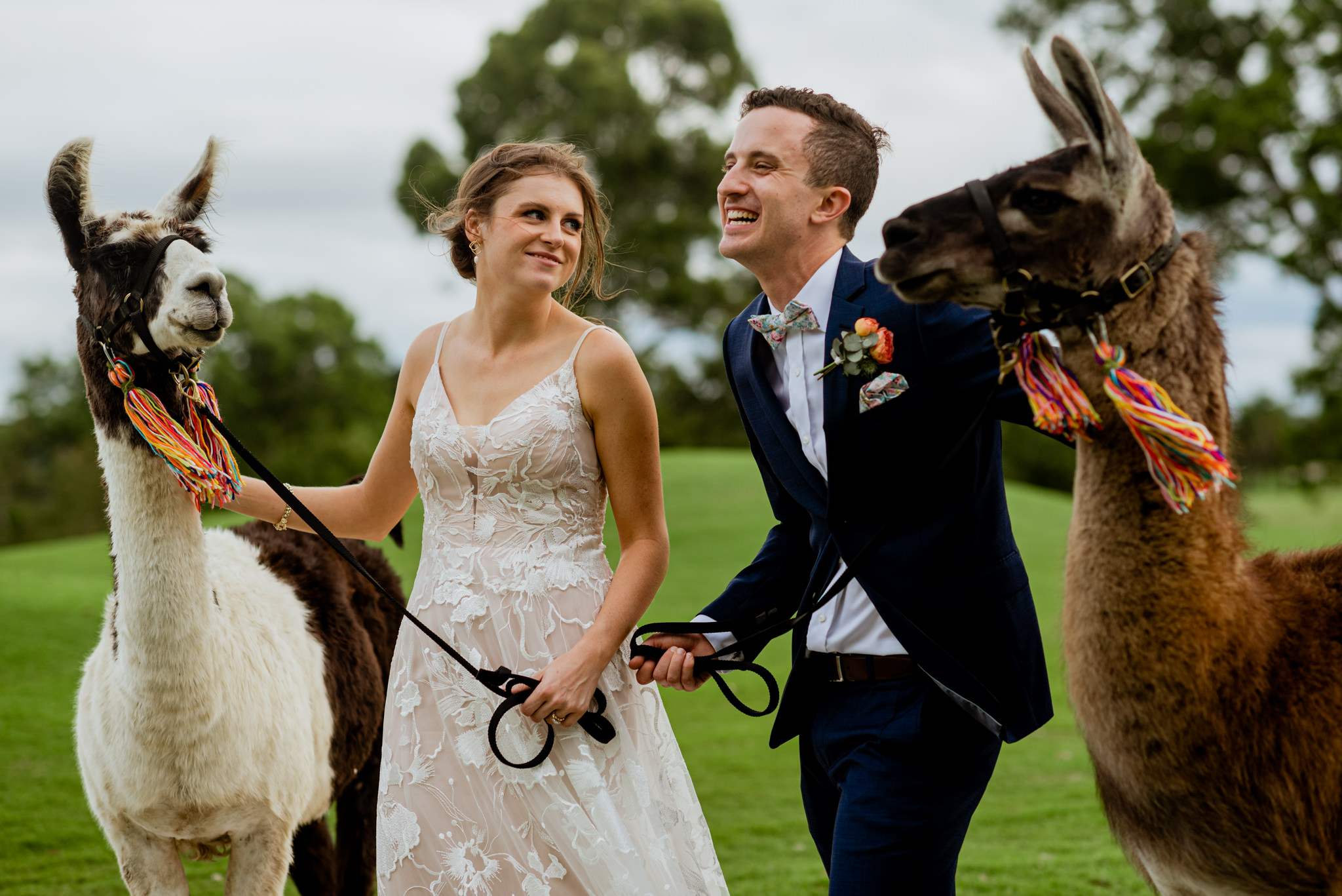 Young newlyweds laughing together with llamas