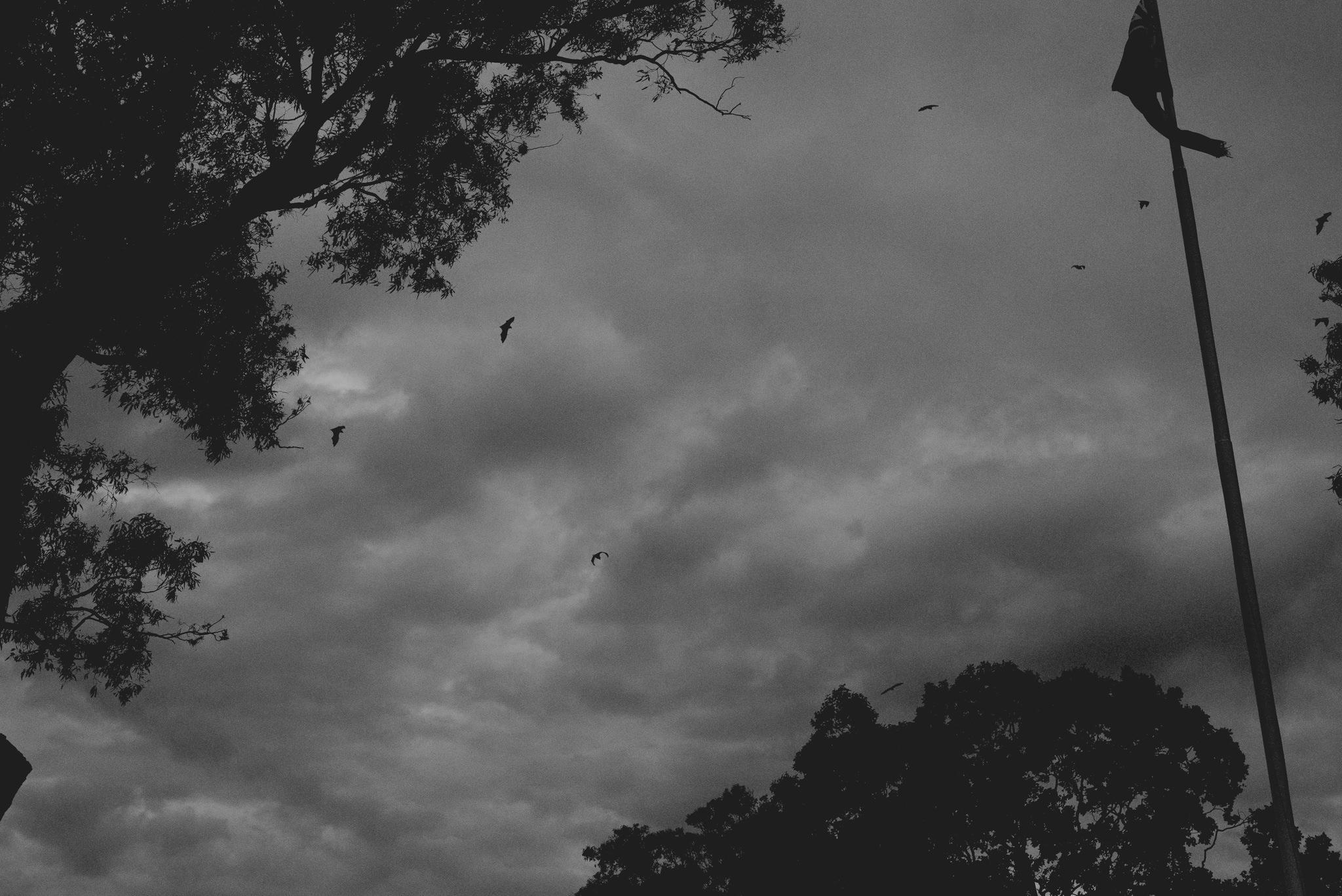 Bats flying across a dark and cloudy sky