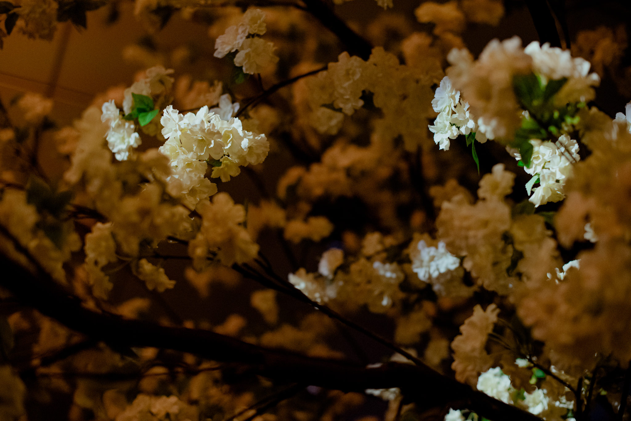 A spotlight shines on some blossoms on a tree