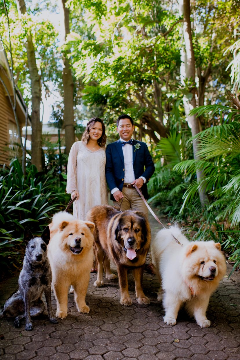 An asian man and woman in formal clothing walk four large dogs in a rainforest